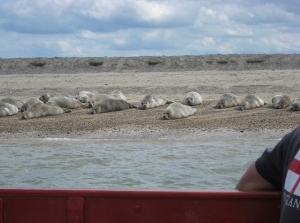 Seal-watching at Blakeney, north Norfolk